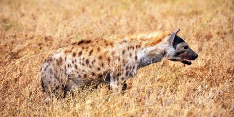 4-Day Tanzania Secrets Lodge Safari