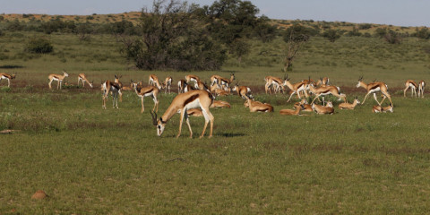 11-Day West Coast & Kalahari Safari
