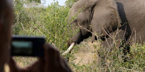 11-Day Safari & Beach | Zululand & Elephant Coast Tour