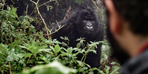 4-Day Rwanda Gorilla Trekking Expedition