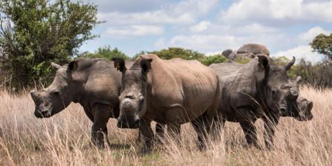 6-Day Amboseli- L Nakuru- Masai Mara Awesome Safari