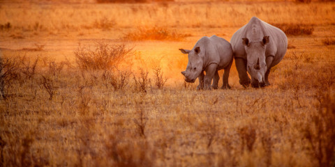 5-Day Impressive Tanzania Lodge Safari