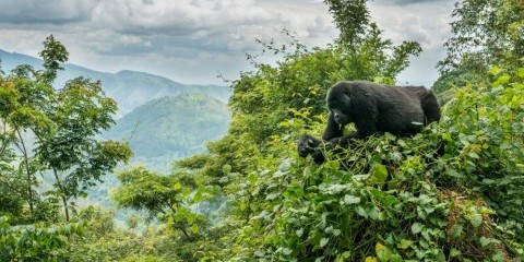 6-Day Nyungwe Forest & the Gorillas