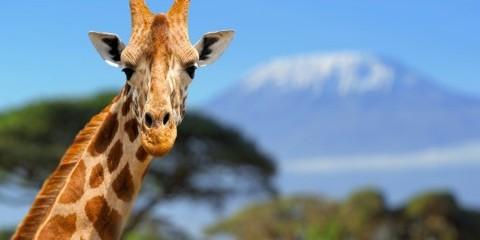 8-Day Taste of Tanzania