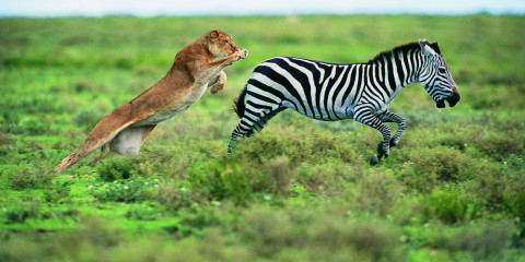 7-Day Best of Tanzania Lodge Safari