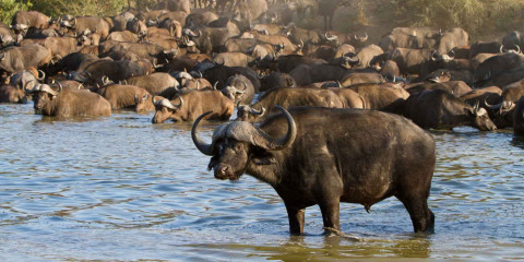 3-Day Greater Kruger Safari with Nthambo Tree Camp