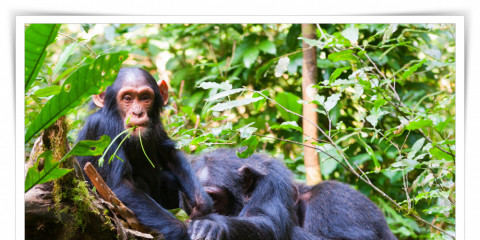 3-Day Kibale National Park/ Chimpanzee Experience