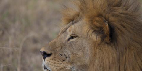 4-Day Lake Nakuru and Maasai Mara mid Range Safari