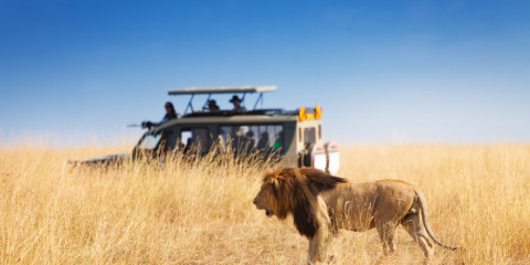 9-Day Best of South Africa: City & Safari