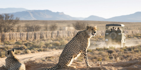 4-Day Kruger National Park Game Viewing