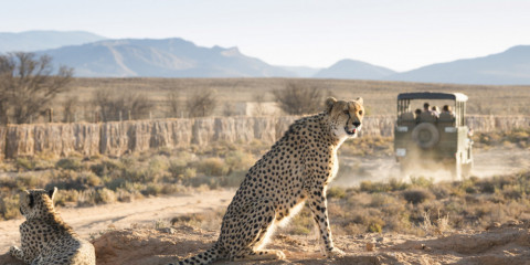 13-Day Villa Safari South Africa
