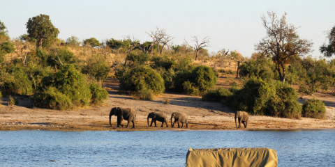 7-Day Botswana Safari Iconic