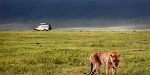 5-Day Greater Kruger Safari