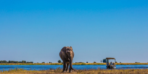 11-Day Botswana and Victoria Falls Safari and Highlights