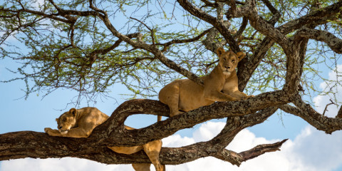 7-Day South Africa Winelands and Wildlife Safari