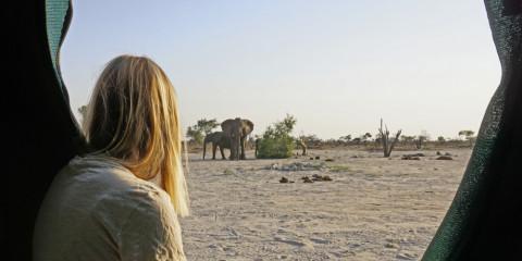 7-Day Botswana Okavango Delta + Moremi Safari