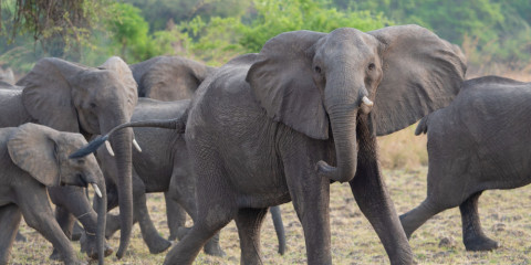 10-Day Behind the Scenes with Zambian Conservationists