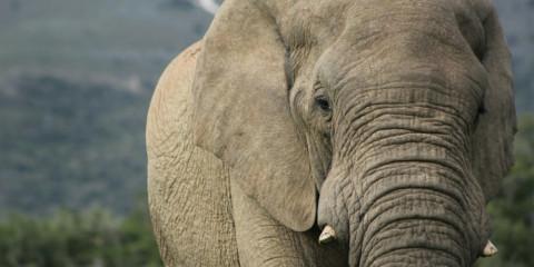 4-Day Eastern Cape Safari with Kariega Main Lodge