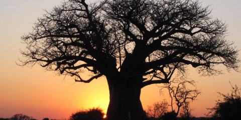 6-Day Home of the Baobab