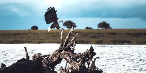 9-Day Makgadikgadi, Moremi, Okavango + Chobe Luxventure®