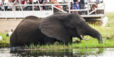 8-Day Botswana & Namibian Safari Experience