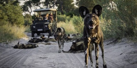 4-Day Fly-in Safari Okavango Delta