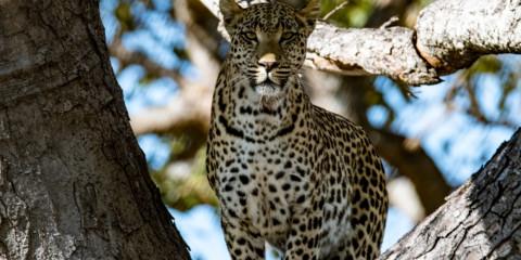 6-Day Chobe & Victoria Falls Deluxe Safari