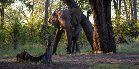 10-Day Okavango to Chobe Fully Catered Camping Safari