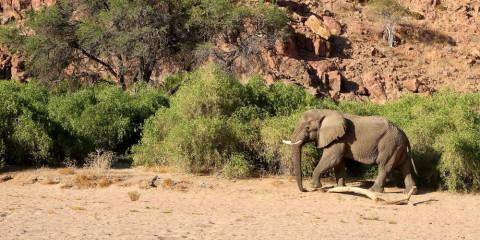 12-Day Namibia Safari