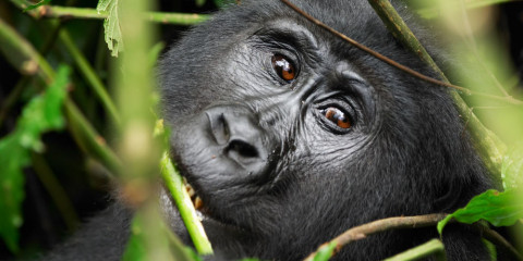 3-Day Uganda - Comfort - Fly-in Gorilla Tour