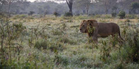8-Day Award-Winning Highlights of Kenya Safari