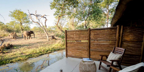 4-Day Chacma Bush Camp - Greater Kruger
