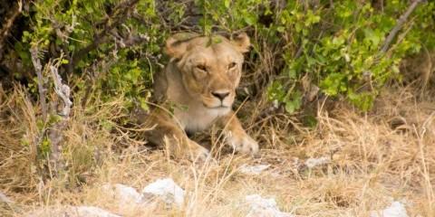 6-Day Dunes & Wildlife Safari