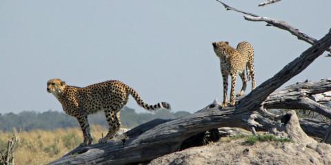14-Day Extraordinary Safari Experience