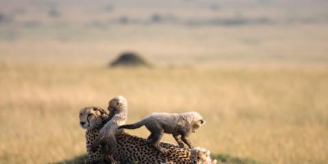 6-Day Okavango Delta and Chobe Safari