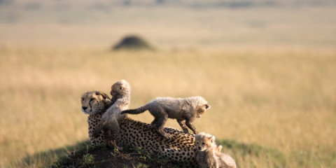 4-Day Safari Experience in South Africa