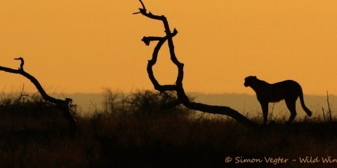 5-Day Kruger Park and Private Lodge Combo Safari