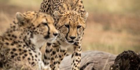6-Day Best of Kenya Explorer Safari