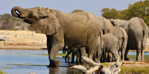 11-Day Namibia Experience Accommodated Safari