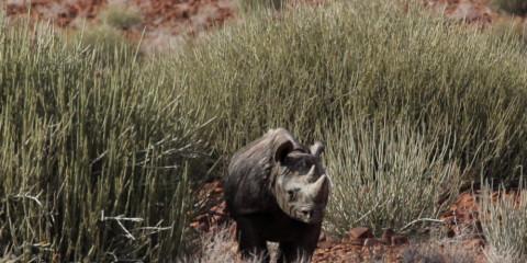 7-Day Namibia Northern Luxury Safari, 7 Days
