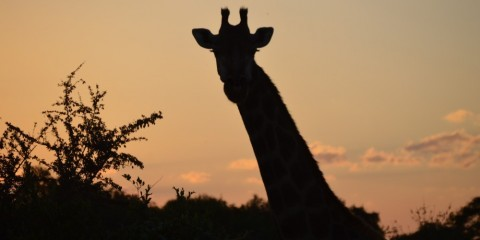 14-Day All Inclusive Kruger Park to Cape Town (Private)