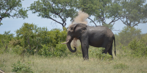 5-Day Exciting Kruger Park & Moholoholo Adventure