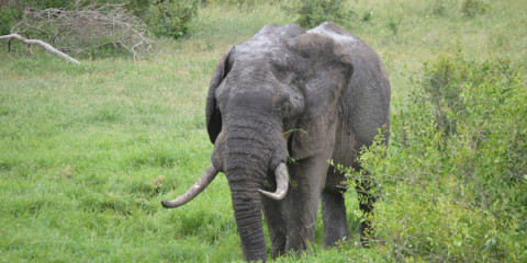 12-Day Kruger, Cape Town, Vic Falls and Chobe Adventure