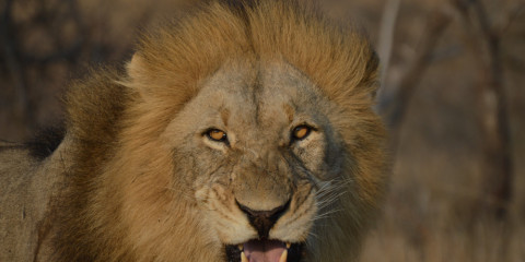 4-Day Exciting Kruger Park & Panorama Route Adventure