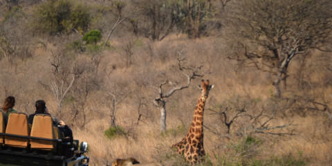 3-Day Exciting Kruger Park Adventure