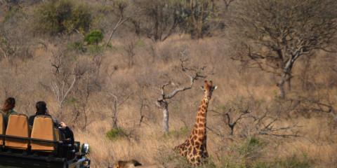 8-Day Kruger Park & Cape Town & Victoria Falls Adventure