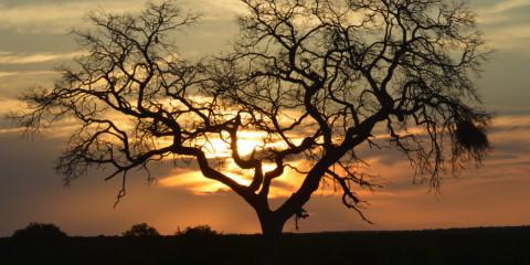 13-Day Kruger Park, Cape Town, Garden Route & Vic Falls