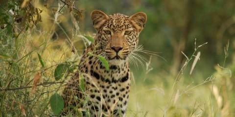 7-Day Moremi Expedition - Botswana Mobile Safari
