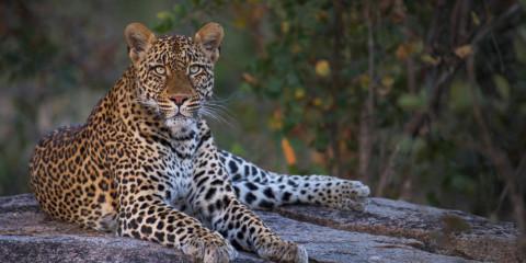4-Day Kruger National Park Fly in Safari