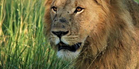10-Day Moremi & Chobe Expedition - Botswana Mobile Safari